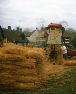 thatch reed comber 3