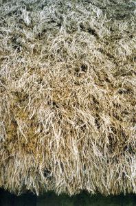 heather thatch Northumberland