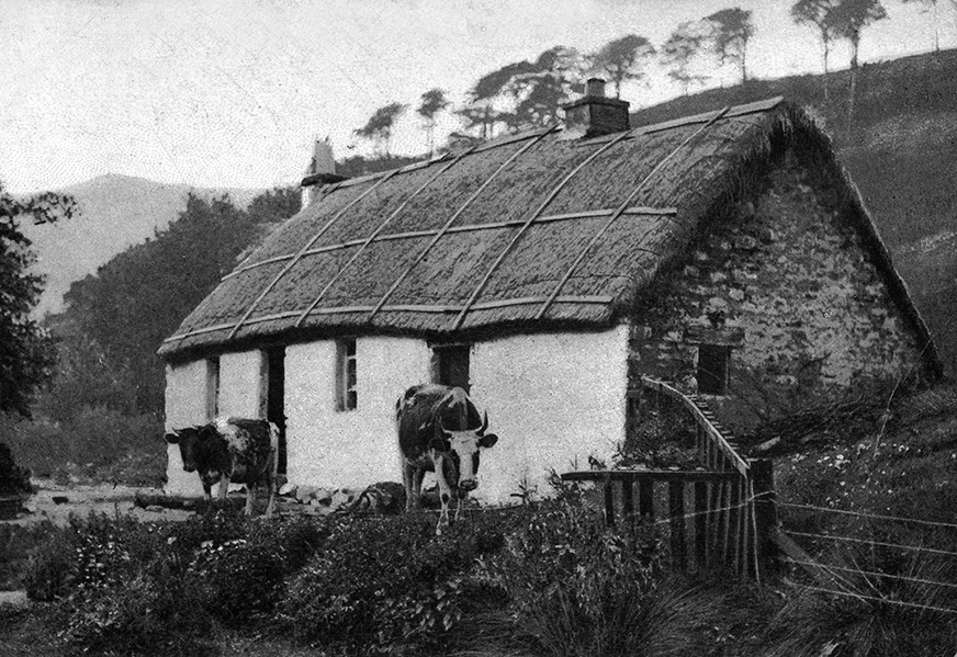 camber frame thatch