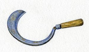 shearing hok