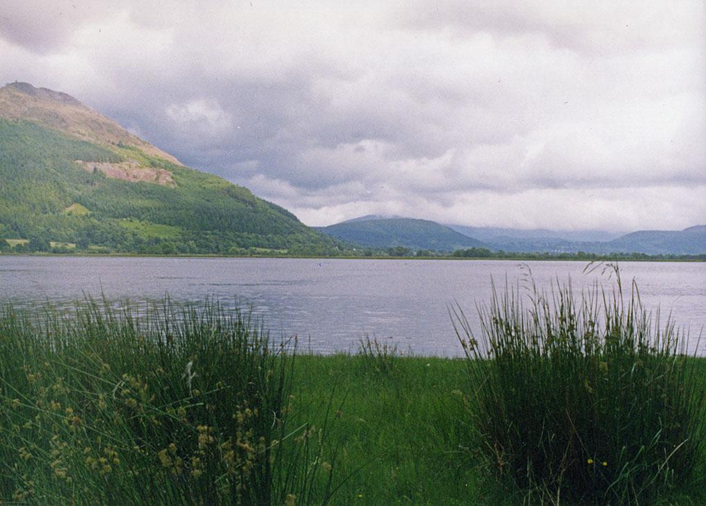 lakeland Thatch