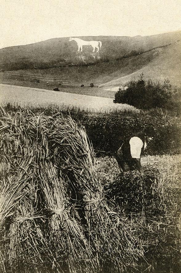 Wilshire harvest