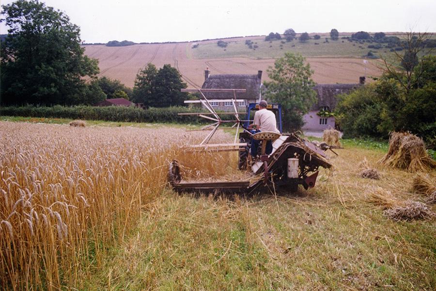 Thatch harvest binder