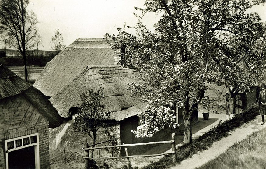 thatch netherlands