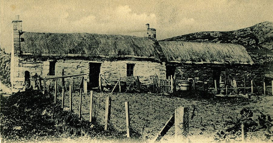 thatch on shetland