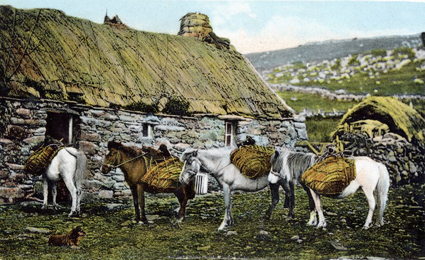 thatching on shetland