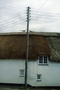 thatch stratton cornwall