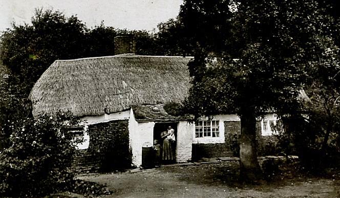 thatch northumberland