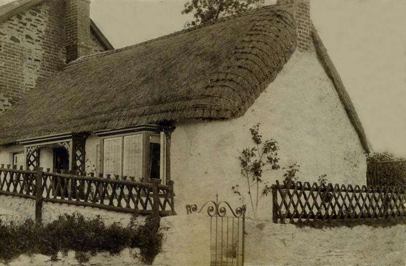 hove thatching
